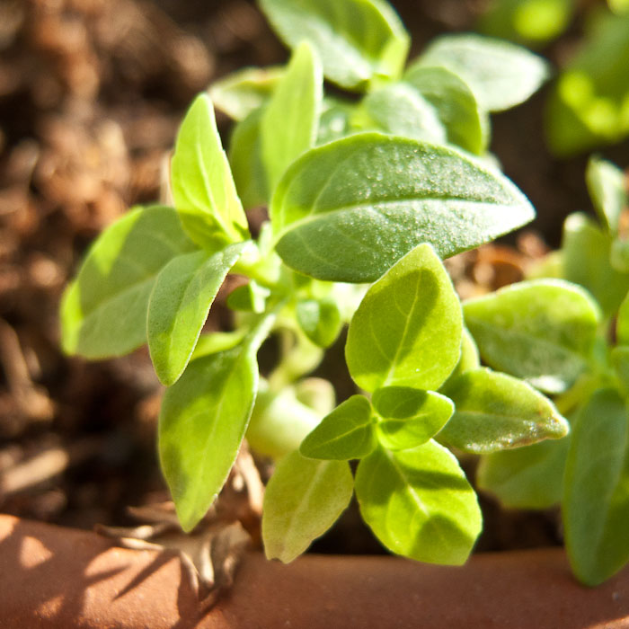 20110106_Newness Plants_001