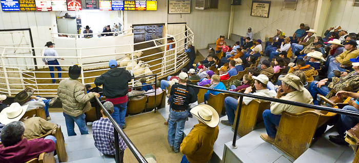 Muleshoe Auction 04